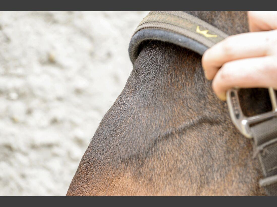 cav-201905-cavallo-coach-2-lir5165-v-amendo (jpg)