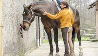 cav-201905-cavallo-coach-g-1-lir5119-v-amendo (jpg)