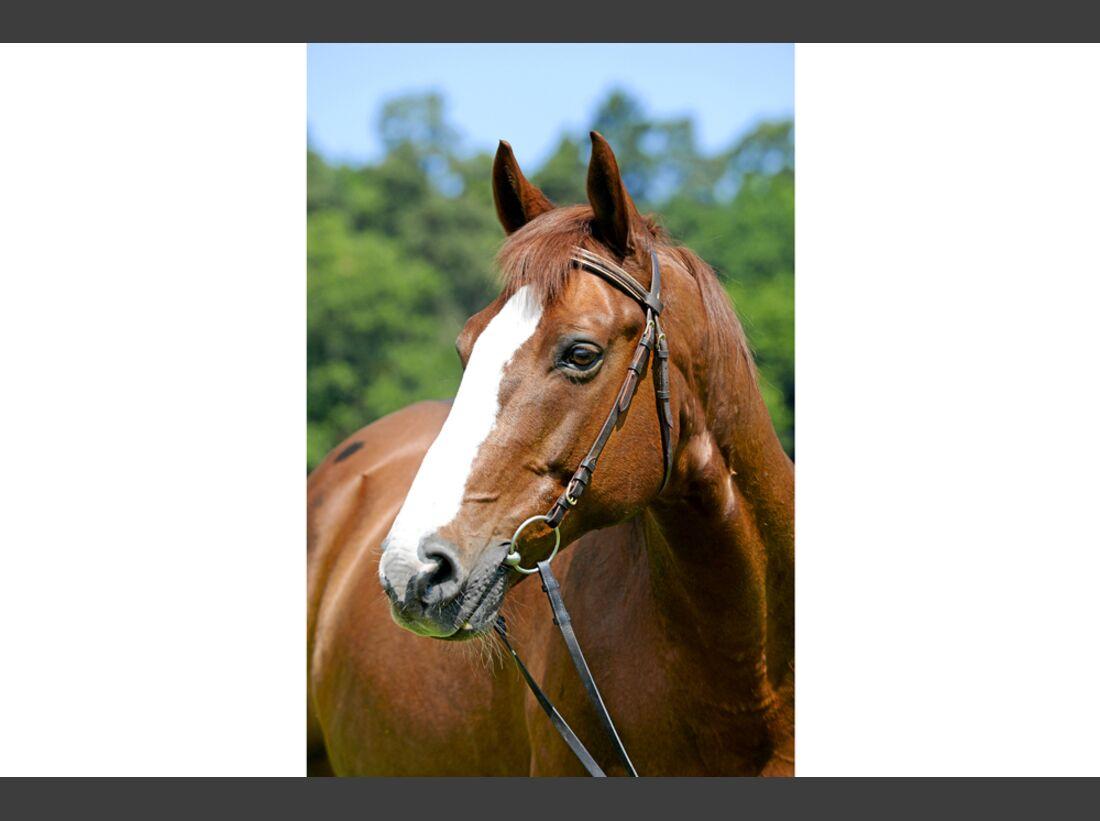 cav-pferde-fotografieren-1-spiegelreflexkamera-lir9958 (jpg)