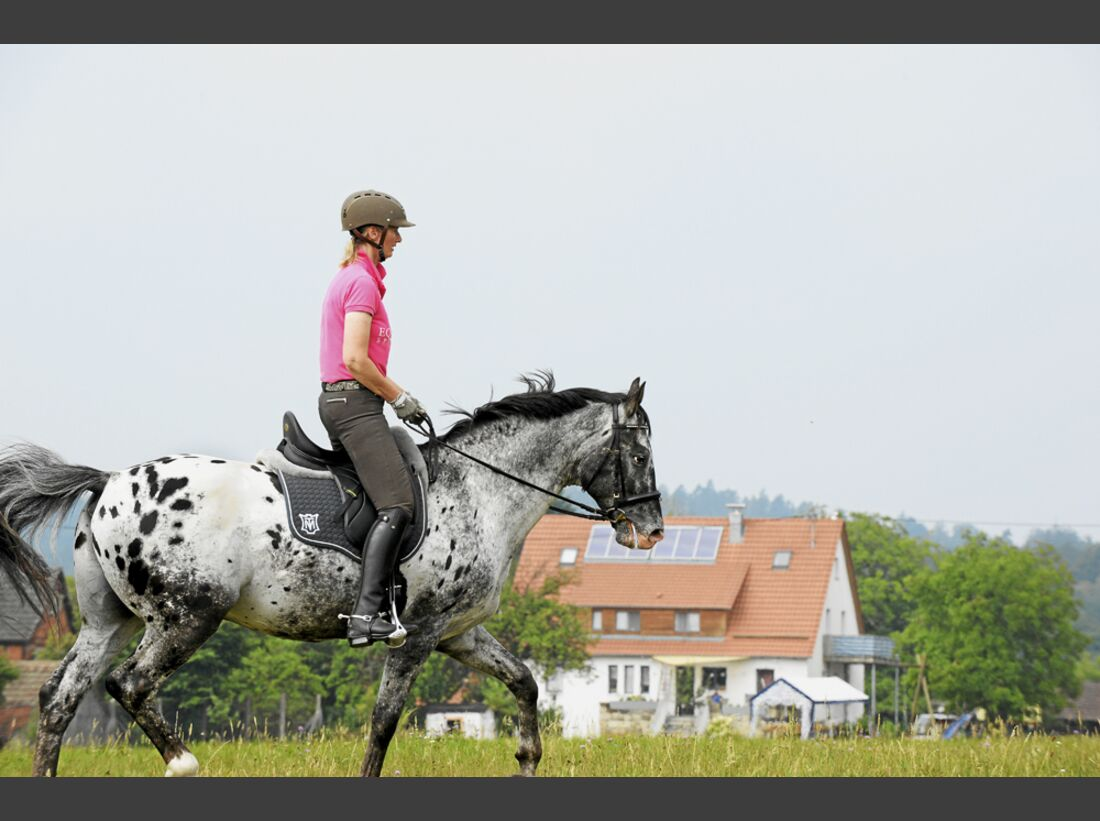 cav-pferde-fotografieren-2-alles-falsch-hintergrund-angeschnitten winkel-lir0372 (jpg)