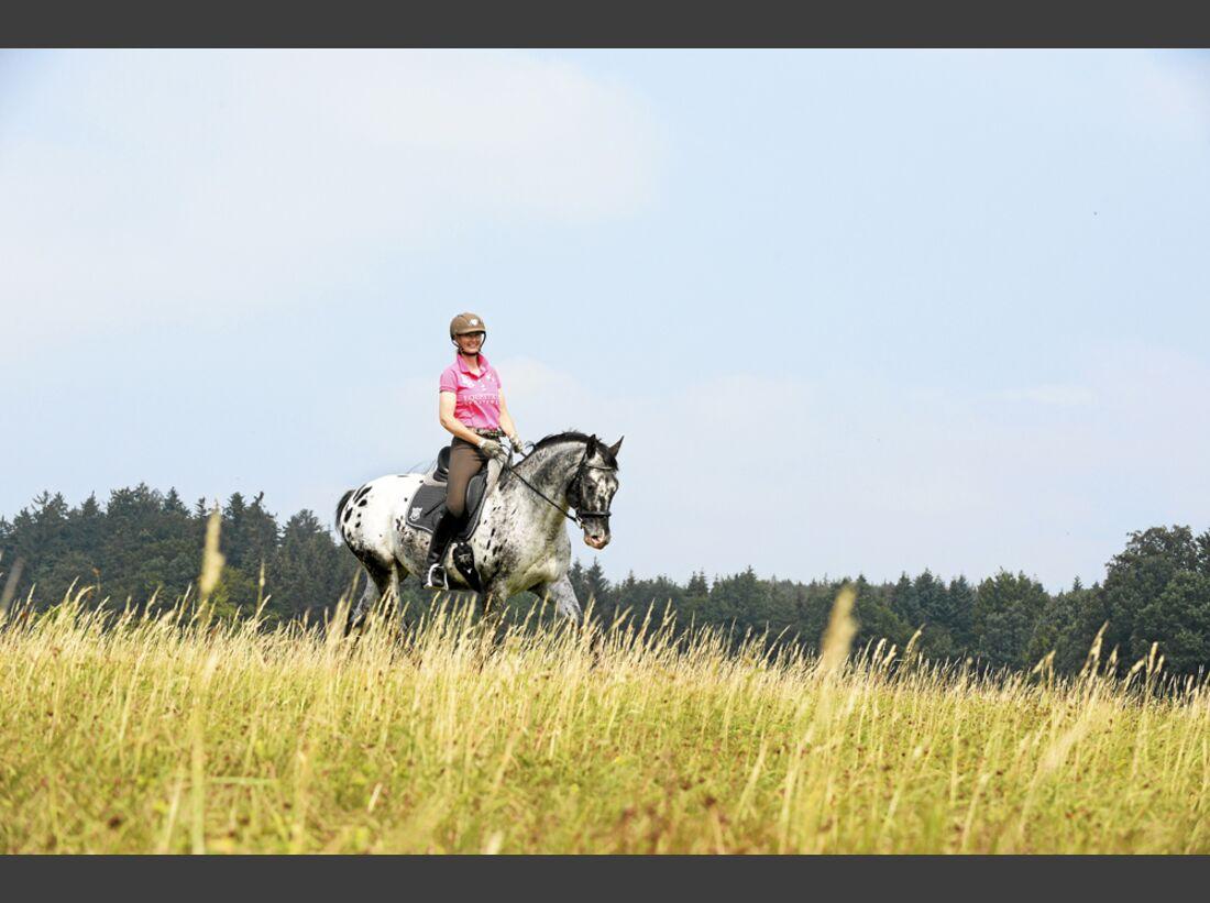 cav-pferde-fotografieren-2-suchbild-zu-viel-platz-lir0483 (jpg)