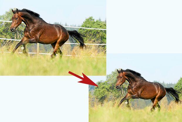 cav-pferde-fotografieren-3-lir9854-1 (jpg)